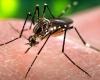 Vector control team continues this weekend in South Reward. Help Beat ZikV More Zika Cases Confirmed Sxm St Maarten