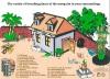 mosquito-borne-mayaro-virus-emerges-in-haiti-appeals-to-residents-to-eliminate-mosquito-breeding-sites