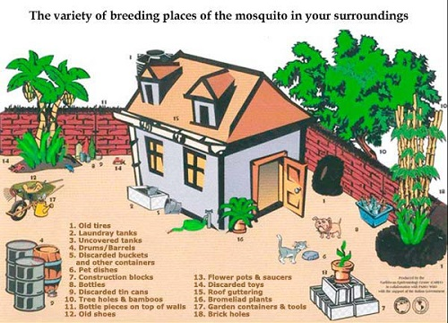 mosquito-borne-mayaro-virus-emerges-in-haiti-appeals-to-residents-to-eliminate-mosquito-breeding-sites